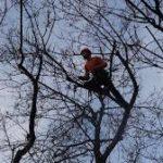 treelogie-11