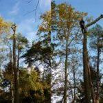 treelogie-12