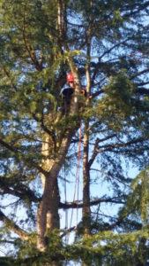 élagage arbre auffargis