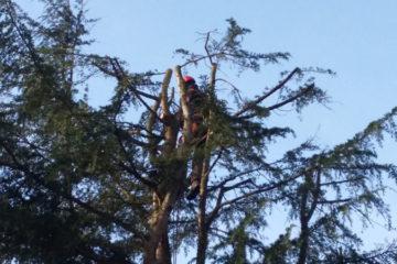 élagage arbre chevreuse